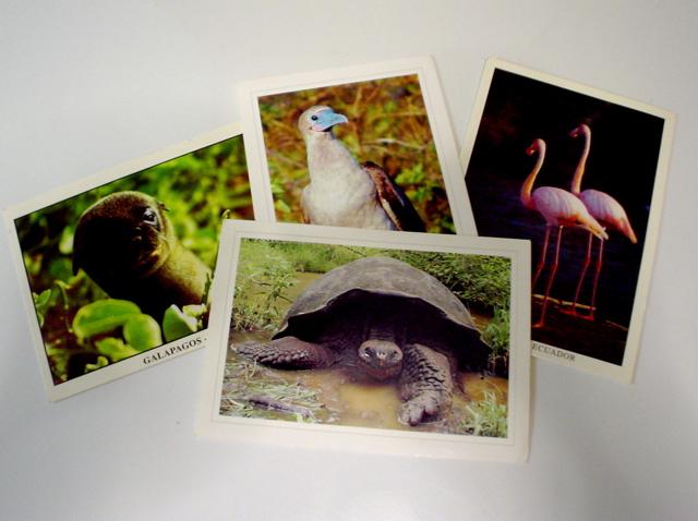 DSC04332postcards.jpg