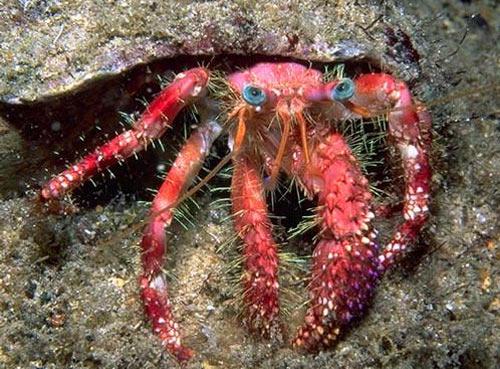 hermit-crab.jpg